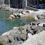 Battesimo del Mare 2016